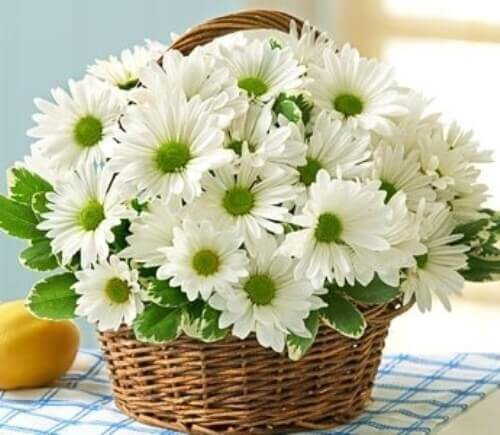 gửi hoa cúc giả đi Mỹ